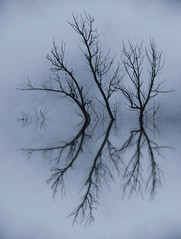 January Reflections (imageClear) Tags: branches winter january beauty simplicity minimalism reflections silhouette tree water lovely landscape cold aperture nikon d500 35mmf18dx imageclear flickr photostream monochrome