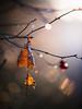 Walking the dog 28/12/2016 (Matthew Dartford) Tags: backlight backlit blow bokeh branch broken dead gold golde golden happisburgh leaf outoffocus ruins tree