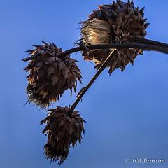 Untitled (HB Jansson) Tags: botan botanicalgarden lund platser sverige sweden winter attribut säsong vinter årstid