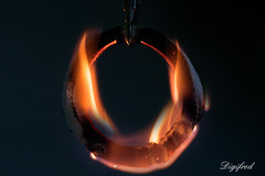 Ring of fire. (Inspired by a Song) (Digifred.) Tags: macromondays inspiredbyasong digifred 2016 macro pentaxk3 johnnycash ringoffire 1963 nederland netherlands holland country music ring fire vuur