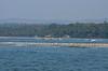 Coastal Konkan. (kailas bhopi) Tags: bhogvebeach konkan konkanphotography nikond5100 beach seashore coastalkonkan seabirds birds coconuttree landscape nature maharashtra malvan sindhudurga tarkarli 703300