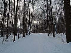 Измайловский лесопарк (Ольга К.) Tags: измайлово парк пейзаж снег деревья