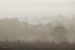 Nestling In The Tree's (teamyam) Tags: mist pog fog misty mistylandscape outdoor foggylandscape landscape winter winerlandscape canon natureslandscape hencloud morning morninglight inspiredbylove