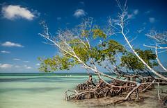 Cuba - Cayo Jutías (Cyrielle Beaubois) Tags: 2016 cuba cyriellebeaubois décembre viñales tree cayo jutías mangrove sea
