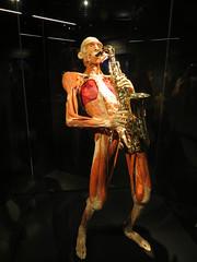 The sax (Lorenzo Bl) Tags: lorenzo blangiardi lydser body world words anatomy anatomia amsterdam van gogh face love sax music gunther von hagens plastinazion plastinazione plastination
