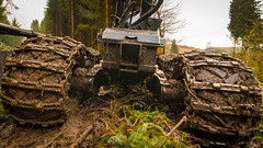 boys' toys (8) (grahamrobb888) Tags: nikon nikond800 sigma20mmf18 sigma birnamwood forest trees machinery industry perthshire scotland mud