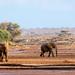 Samburu Kenya-112.jpg