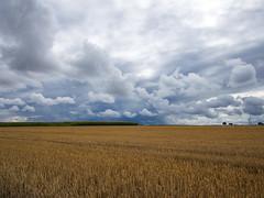 dark clouds (grau86) Tags: sommer feld himmel wolken landschaft