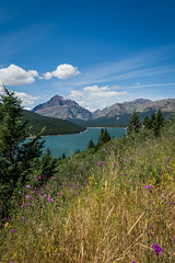 lower two medicine lake ~ glacier national park (laughlinc) Tags: glaciernationalpark lake landscape laughlinc lightroom lowertwomedicinelake montana nikon1755mm24 nikond7200 wildflowers nikon