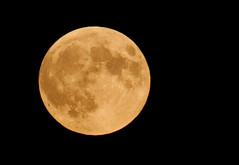 t42_868520150928DSC_7792.jpg (Joseph_Qiu) Tags: cloud moon lake burlington dusk fullmoon moonrise lakeontario supermoon