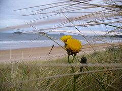 Beach (Tobymeg) Tags: sea sky sun flower beach grass yellow scotland sand isle