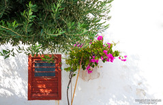 Red window (alexandros_galatas) Tags: pink flowers trees red white green art window wall contrast canon eos 50mm f14 sigma 5d marki mark1 mk1