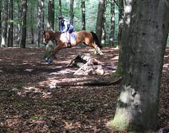 Doorn (Steenvoorde Leen - 1.5 ml views) Tags: horses horse jumping cross doorn pferde pferd reiten manege paard paarden springen 2015 utrechtseheuvelrug hindernis sgw arreche stalgroenendaal manegedentoom
