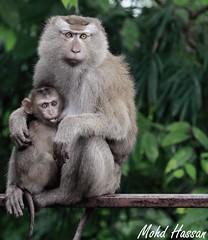 (mohd alsulaiti) Tags: canon lens zoo google arabic explore arab thai 7d cz anon qatar   2015  qtr  dohaqatar               mohdalsualiti  instagramenjoyqtr