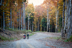 Dirt Bike Riders in Wooded Park (Image Catalog) Tags: park trees cyclist outdoor path motorbike trail riding dirtbike gravel publicdomain