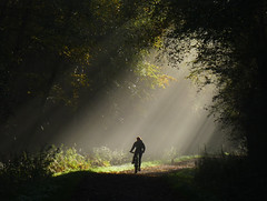 Moment in the sun (ArtGordon1) Tags: uk november autumn england silhouette misty forest cycling eppingforest cyclist silhouettes cycle sunrays essex autumnal shaftsoflight cycleride 2015 davegordon davidgordon artgordon1 daveartgordon daveagordon davidagordon