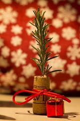 Christmas' tree (orlando_annachiara) Tags: christmas navidad albero natale rosmarino faidate sughero