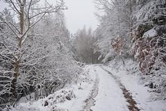 Offensive hivernale (Excalibur67) Tags: snow nature forest landscape nikon sigma neige paysage d7100 vosgesdunord forts ex1020f456dchsm