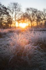 Cold feet romance. (look to see) Tags: bokeh goldenhour frost hoarfrost rijp cold landscape mood flares sintmaartensheide beek bree belgium 2016
