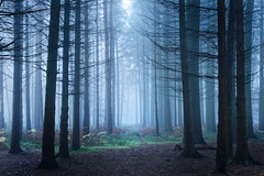Dark woods (JonoHub) Tags: fog foggy foggylandscape nationaltrust woodland mysterious canon5dmk2 foggytrees winter cold winterwood forest