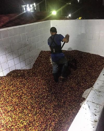 PDG's Micro Coffee Festival El Salvador