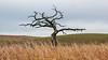 Dull (John Westrock) Tags: nature tree landscape rural rollinghills overcast pacificnorthwest washington canoneos5dmarkiii canonef2470mmf28lusm rosalia unitedstates us