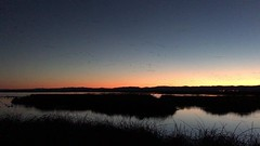 Sunset Activity at Sacramento NWR (a.k.a. Flash) Tags: birds flight migration pacific flyway ibis noise awesomeness commotion