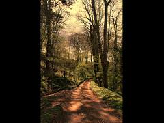 Photo of Woodland track