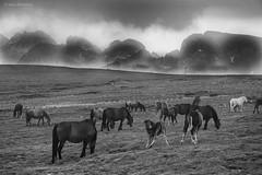 Grazing Horses, Rila Mountains, Bulgaria (Jean Ka) Tags: mountain montagne berge gebirge wandern wanderung randonnée hike hiking bulgarien bulgarie българия болгария landscape landschaft paysage outdoor horses chevaux pferde cavalli caballos bulgaria