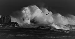 January26Image9885 (Michael T. Morales) Tags: wave pacificgrove ptpinos wavecrashing montereybay rocks