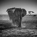 African Elephants in a line, Amboseli National Park, Kenya, East Africa