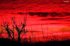 Sky of blood (Setsukoh) Tags: sky ciel cieux skies heaven tree arbre silhouette noir black red rouge rot cloud nuage sunset coucherdesoleil blood sang cieldesang skyofblood nature baum apocalyptic apocalyptique france frankreich frañs brochall lorraine lothringen grandest canon7d