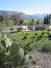 Cactus and visitor center, Volubilis, Morocco (Paul McClure DC) Tags: morocco almaghrib fèsmeknèsregion volubilis jan2017 roman architecture historic scenery modern