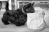 """-20170116ODC43 (Laurie2123) Tags: dad laurieturner laurieturnerphotography laurie2123 odc odc2016 ourdailychallenge backyard bucket bnw """"black white monotone monochrome"""