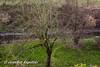 Where is the Bird? (Bernsteindrache7) Tags: winter sony alpha 100 düsseldorf flora fauna garden green germany nrw outdoor landscape animal tree pet bird