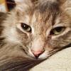 Meow. 🐱 (Jenn ♥) Tags: ifttt instagram