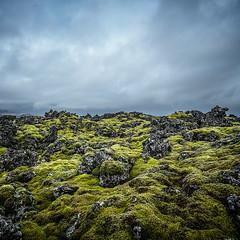 The Moss, Iceland (cpphotofinish) Tags: weather eos5dmk3 canon cpphotofinish carstenpedersen canondslr carst1 canon5dmk3 canonredlable ef1740mmf4lusm snæfellsnesvegur vesturland iceland snæfellsnes roadtrip fog rain autumn reykjavik waterfall water