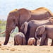 Elephant family together to drink water