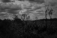 Esqueletos (© fOto) Tags: humedales humedal sanjosé santalucía canelones montevideo montevidéu fotoarte uruguay uruguai naturaleza nature natureza ambiente medioambiente landscape paisaje registro culturaambiental claudiocigliutti pentax pentaxricoh lr lightroom k5 pajonal vegetación río river