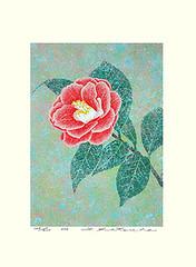 Camellia (Japanese Flower and Bird Art) Tags: flower camellia japonica theaceae yukio katsuda modern screenprint print japan japanese art readercollection