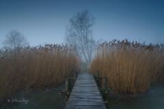 Am See (Claudia Bacher Photography) Tags: see lake pfäffikersee steg schilf reed baum tree nebel fog suisse schweiz switzerland sonya7r winter wasser himmel heaven landschaft landscape natur nature outdoor