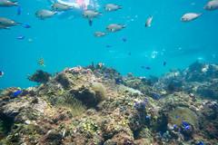 20150922-DSC_4412.jpg (d3_plus) Tags: sea sky fish beach japan scenery underwater diving snorkeling  shizuoka    apnea izu j4  waterproofcase    skindiving minamiizu       nikon1 hirizo  1030mm  nakagi 1  nikon1j4 1nikkorvr1030mmf3556pdzoom beachhirizo misakafishingport  1030mmpd nikonwpn3 wpn3