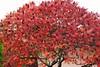 Les couleurs de l'automne (Les photos de LN) Tags: nature automne rouge couleurs arbre feuilles saison végétation feuillage coloris