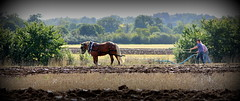 Country Life [Explored] (The Stig 2009) Tags: life horse castle field rural countryside o farm country property tony queen windsor crown farmer 2009 plough stig ploughing 2015 clayhill frogmore thestig tonyo thestig2009