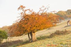 Hatfield_Forest-24 (Eldorino) Tags: park uk morning autumn trees nature forest sunrise landscape countryside nikon britain centre jour hatfield bishops stortford essex hertfordshire stanstead hatfieldforest