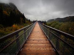 Bridge above the Treetops (Torsten Frank) Tags: bridge bayern deutschland herbst architektur holz baum weg steg pfad allgäu baumwipfelpfad baumkronenweg baumwipfelweg