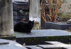 Cat on Tombstones in Cimetière de Montmartre (carolemason) Tags: paris cat tombstones cimetièredemontmartre