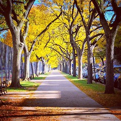 beautiful #prospectpark #park in #brooklyn #nyc... (Thu Trang Ho) Tags: life park nyc travel light usa sun newyork color tree nature beautiful yellow brooklyn america amazing cool pretty awesome prospectpark picoftheday uploaded:by=flickstagram instagram:venue=3340896 instagram:venuename=prospectpark instagram:photo=1108387152672983095186442945