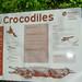 Krokodil Warnung Schild