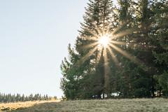 Schwarzwald Sonne III